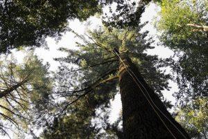 La Foresta di Vallombrosa